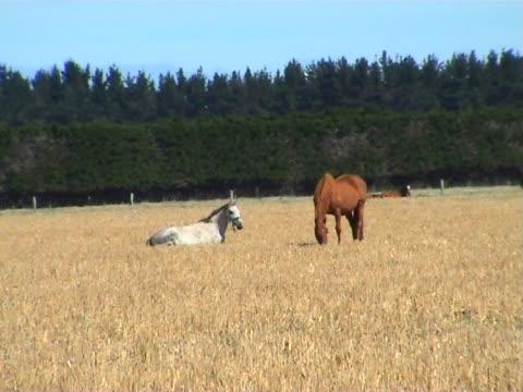 PAL: Feld mit Pferden