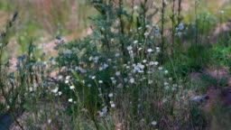 Field with many white Butterfly flying dancing circle around. slowmotion