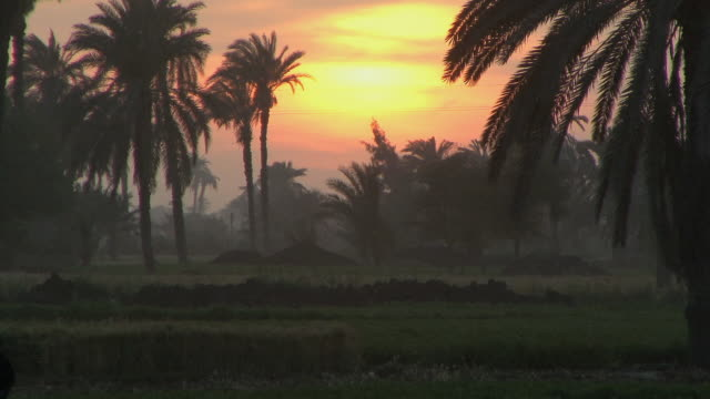 ws field with palm trees at sunset, fayoum, egypt - desert oasis stock videos & royalty-free footage