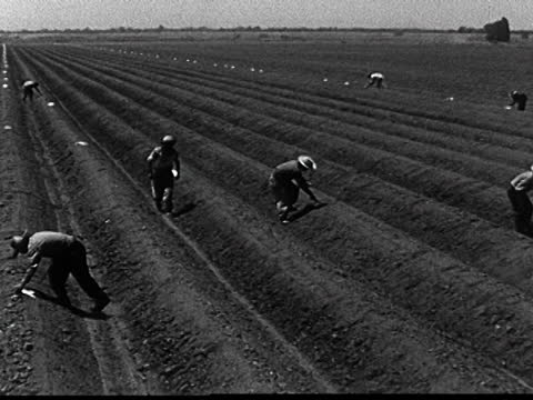 USA: New To The Video Archive - 'Why Braceros?' (1962)