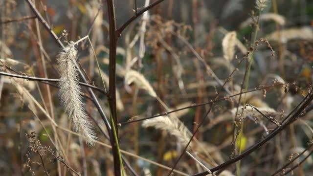 """Feld mit """"twigs'und Herbst brush"""