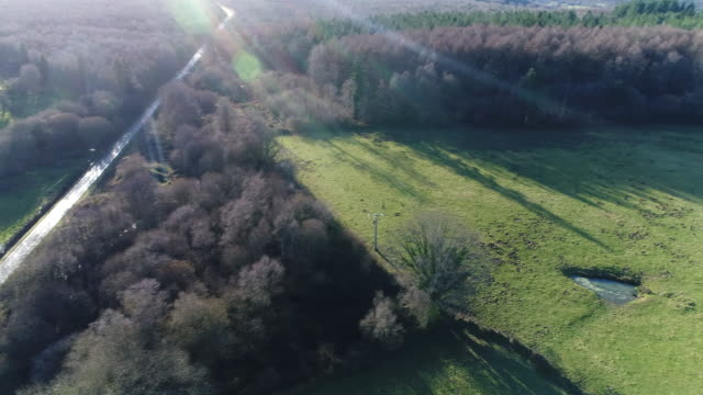 fields and forest seen by drone - normandie stock-videos und b-roll-filmmaterial