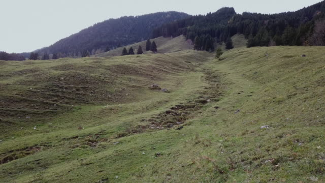 fields and hills of bavarian landscape - spruce stock videos & royalty-free footage