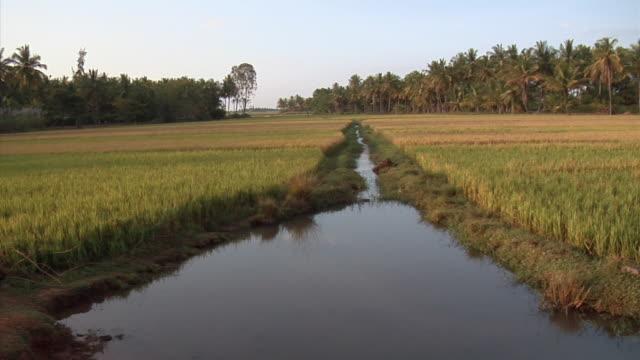 WS, PAN, Fields and palm trees, Sravanabelagola, Karnataka, India