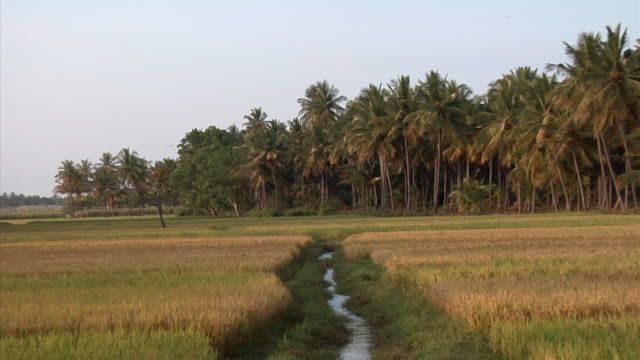 ZO, WS, Fields and palm trees, Sravanabelagola, Karnataka, India