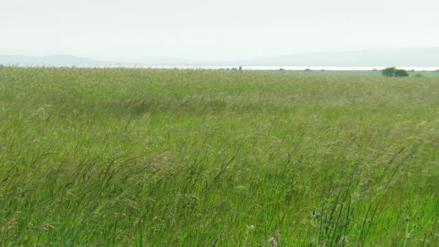 Fields and reeds of Lake Neusiedl