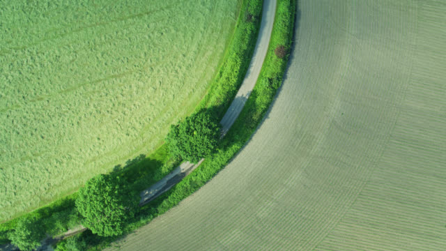 fields divided by country road and hedgerows - top down drone shot - cultivated stock videos & royalty-free footage