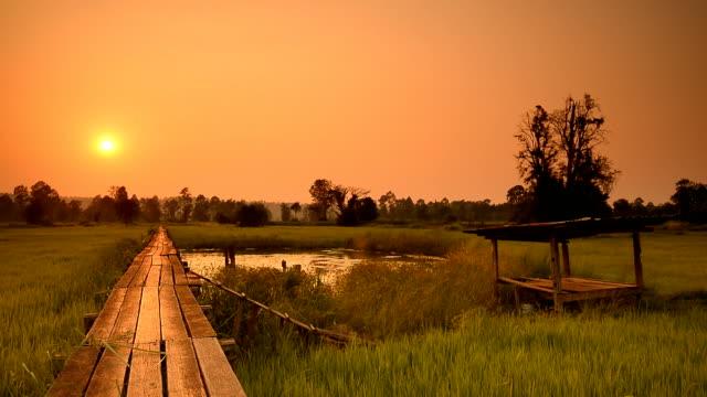 Campi di sera in Tailandia