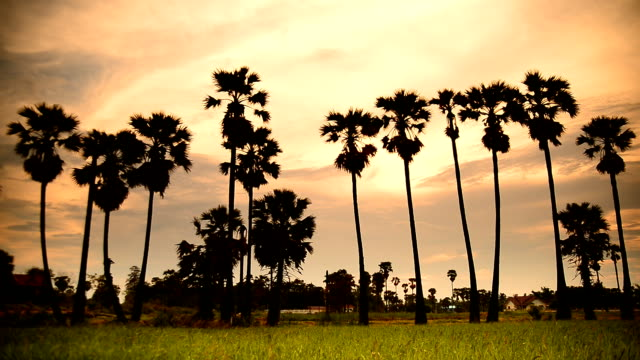 fields in the evening in thailand - nun stock videos & royalty-free footage