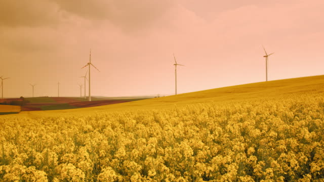 ds fields of blooming canola surrounded with wind turbines - generator stock videos & royalty-free footage