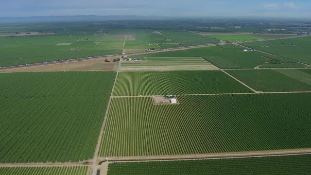 Fields Of Crops In Fresno County CA