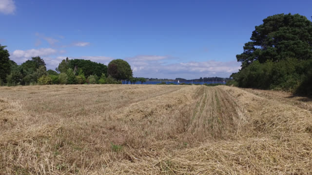 vidéos et rushes de fields of cut wheat by the sea in brittany - prairie
