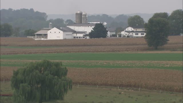 Fields of grain grow on an Amish farm.