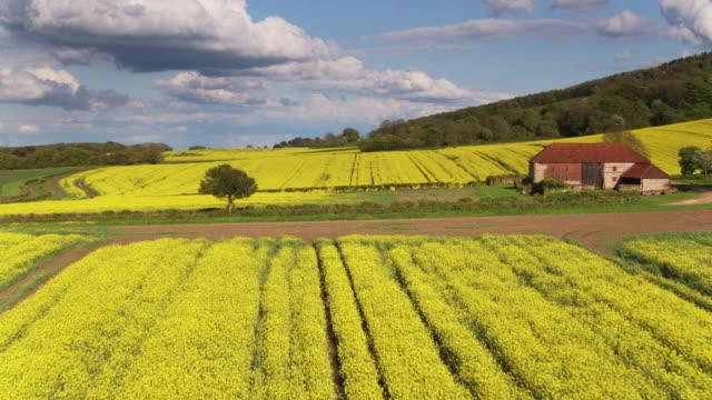 vídeos y material grabado en eventos de stock de campos de colza en west sussex - tiro del zumbido - paisaje ondulado
