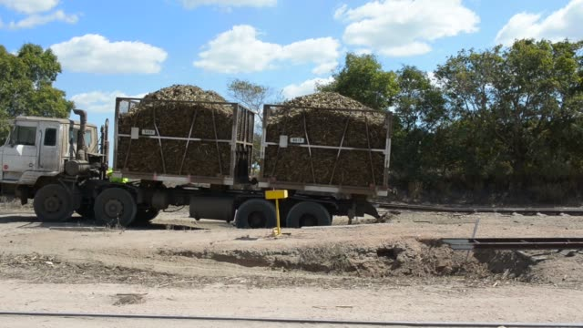 fields of sugarcane stand at a plantation near ayr, queensland, australia, on sunday, aug 9 a sign warning drivers to watch for slow vehicles stands... - ayr stock videos & royalty-free footage