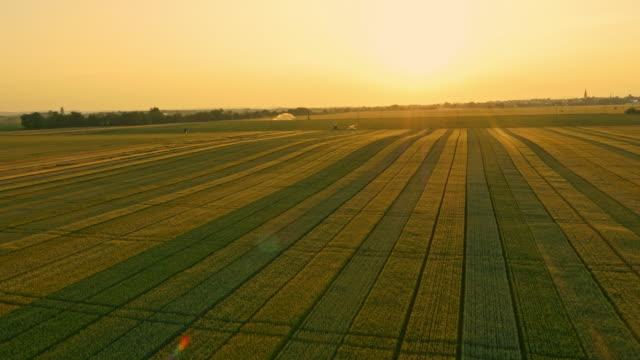 vidéos et rushes de vue aérienne de champs de blé au coucher du soleil - cereal plant