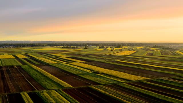 vídeos de stock, filmes e b-roll de campos aéreos de trigo ao nascer do sol - plano geral tipo de composição de filme
