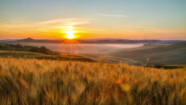 t/l fields of wheat in the sunrise - horizon over land stock videos & royalty-free footage
