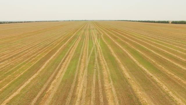 黄色い小麦収穫後の空中: フィールド - クワッドコプター点の映像素材/bロール