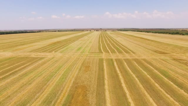 aerial: fields of yellow wheat after harvesting - multicopter stock videos & royalty-free footage