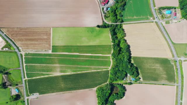 fields pattern - non urban scene stock videos & royalty-free footage
