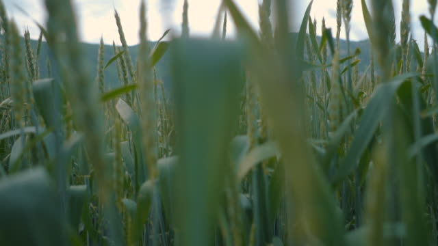 fields - grass stock videos & royalty-free footage