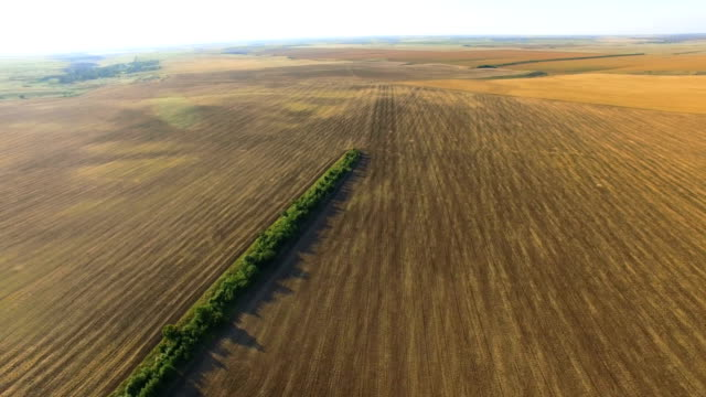 fields with different crop types, aerial video - multicopter stock videos & royalty-free footage