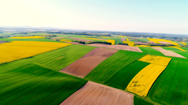 Fields with various types of agriculture 4K