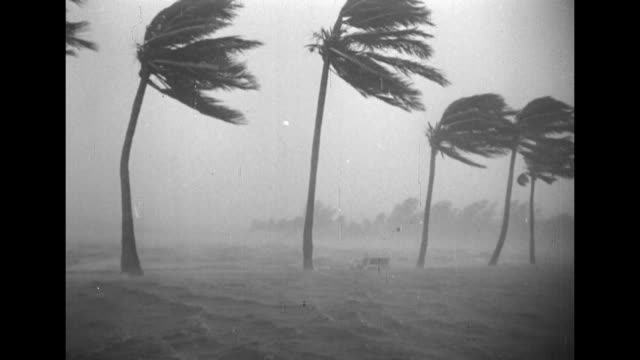 fierce rain and winds blowing palm trees waves around trees and bench as the okeechobee hurricane approaches / note exact month/day not known - 1928 stock videos & royalty-free footage