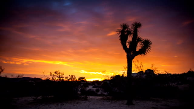 fiery joshua tree sunset - time lapse - joshua tree national park stock videos & royalty-free footage