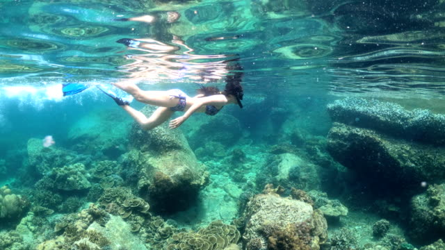 underwater, fiftyfifty, under/over:: woman in bikini snorkeling exotic reef with tropical fish - snorkelling stock videos & royalty-free footage