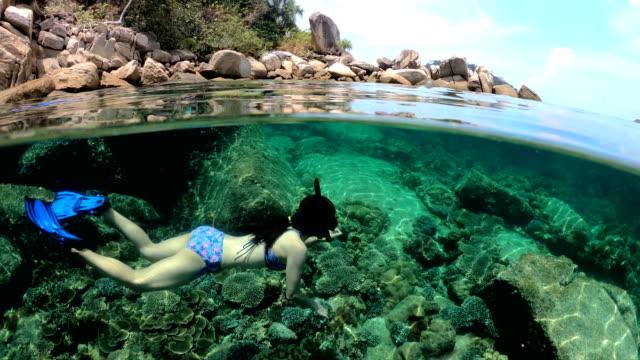 unterwasser, fiftyfifty, under/over:: frau im bikini schnorcheln exotischen riff mit tropischen fischen - rotes meer stock-videos und b-roll-filmmaterial