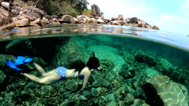 UNDERWATER, FiftyFifty, Under/Over:: Woman in bikini snorkeling exotic reef with tropical fish