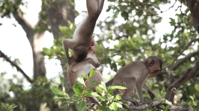 fighting monkeys on tree branches - animals in the wild stock videos & royalty-free footage