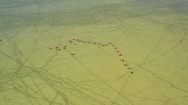 湖の上のフィラモンゴス - 野生生物保護点の映像素材/bロール