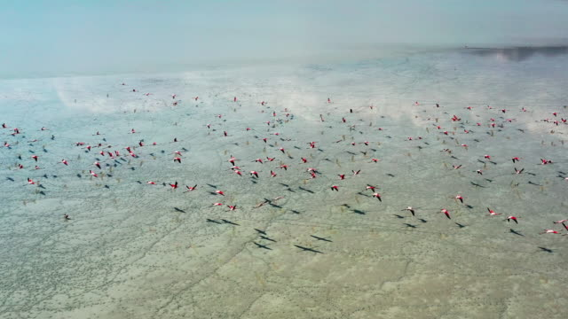 vídeos y material grabado en eventos de stock de filamingos en el lago - turquía
