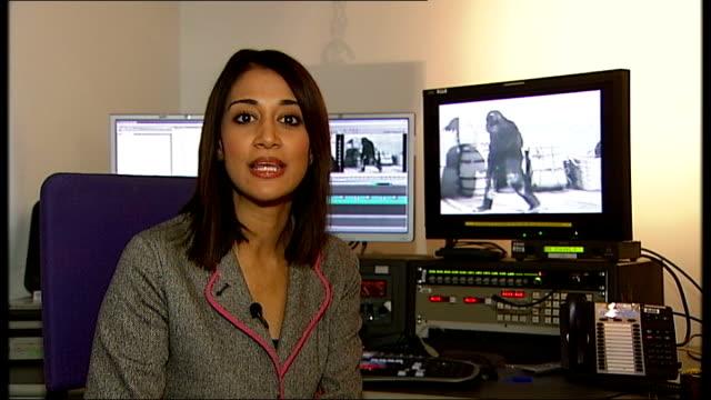 vídeos y material grabado en eventos de stock de tarzan chimpanzee 'cheetah' dies england london gir int reporter to camera sot - tarzán obra reconocida