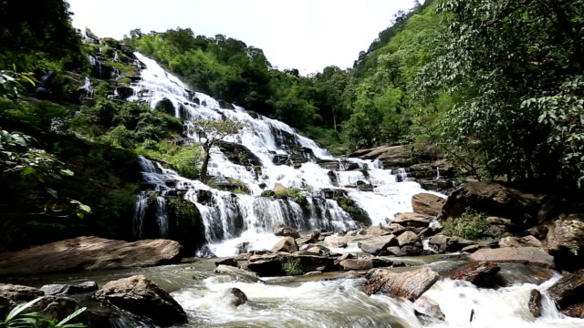 vídeos y material grabado en eventos de stock de hd de inclinación: cascada en bosque tropical - árbol tropical