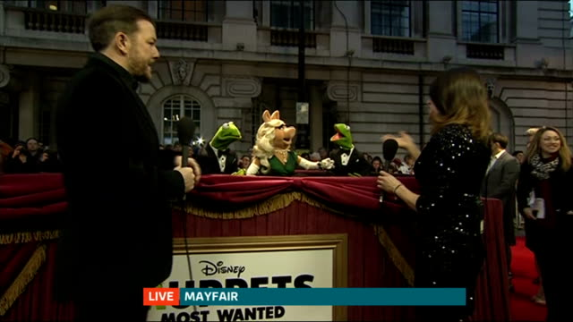 london premiere of 'muppets most wanted'; england: london: mayfair: ext reporter live interview with muppets - kermit the frog, miss piggy and... - ricky gervais stock videos & royalty-free footage