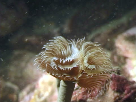 filter feeding tube worm opening - sea worm stock videos & royalty-free footage