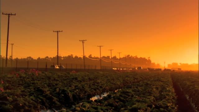 rows of strawberry plants in field traffic moving on rural road along side of farmland silhouetted electric poles wires trees bg sky is yellow... - telegraph pole stock videos & royalty-free footage