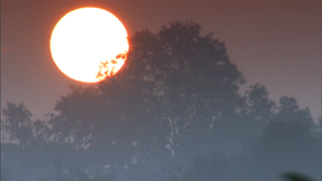 sun rising behind tree top. - south wales stock videos & royalty-free footage