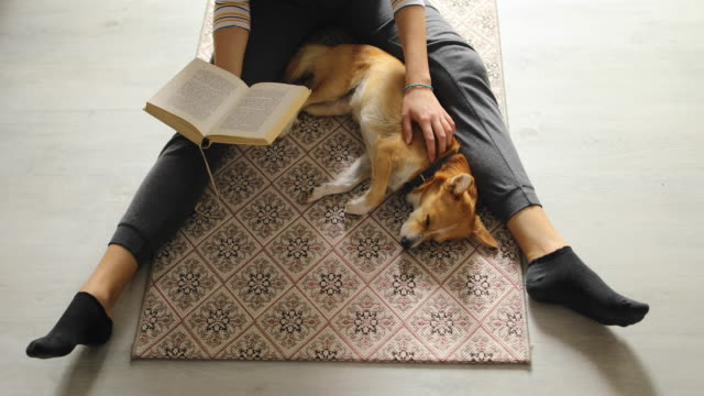finalmente da solo a casa vicino cane e libro - sitting video stock e b–roll