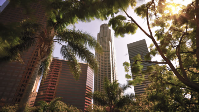 financail building through tree. los angeles - environmental conservation stock videos & royalty-free footage