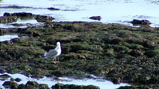 turner contemporary modern art gallery to open in margate; seagull amongst rock pools long shot offshore wind farm long shot man with dog on beach - modern rock stock videos & royalty-free footage