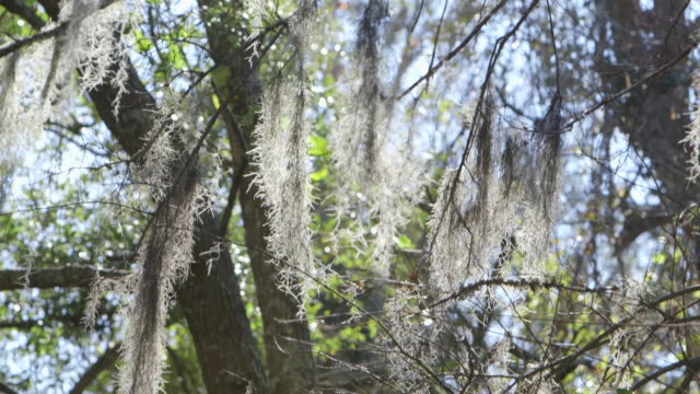 fine organic material on tree branches - wiese stock videos & royalty-free footage