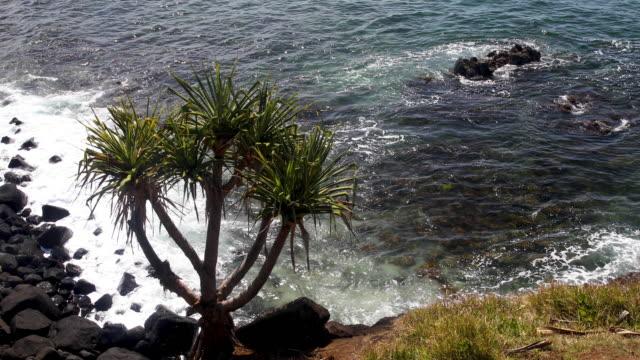 fingal head australia - tide stock videos & royalty-free footage