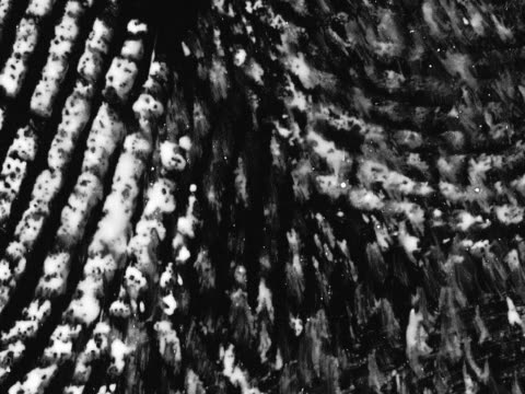 fingerprints on black background - artbeats stock-videos und b-roll-filmmaterial