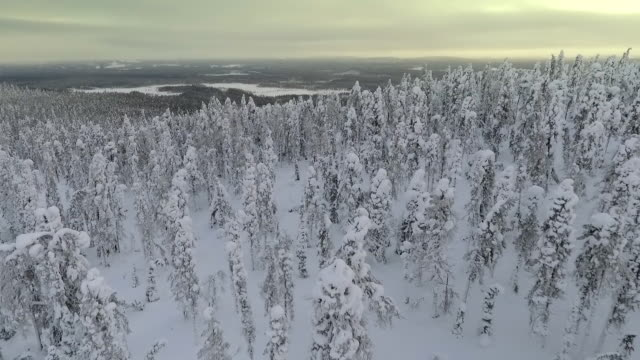 finnish lapland aerial footage - heavy snow forest - lumber industry stock videos & royalty-free footage