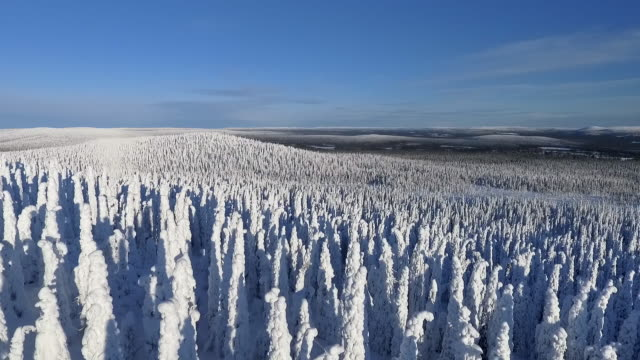 finnish lapland aerial footage - heavy snow forest - finlandia video stock e b–roll